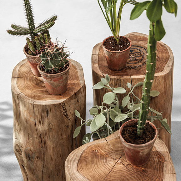 plant display: gloster raw round teak stools used as side tablesimage provided courtesy of gloster furniture, inc.